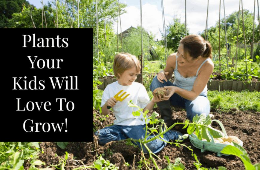12 Plants to Grow When Gardening with Children