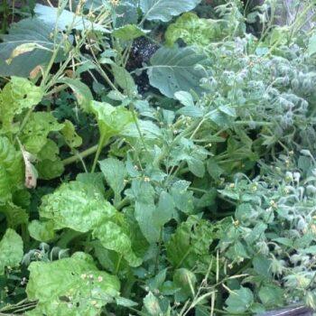 Self-Seeding Plants in the Garden Farm