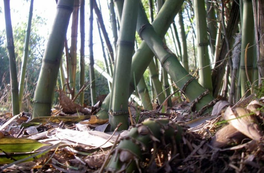 To Bamboo or Not to Bamboo, and is there such a thing as non-spreading bamboo?