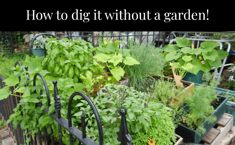 Gaining Ground: 8 places to grow food if you don't have access to land