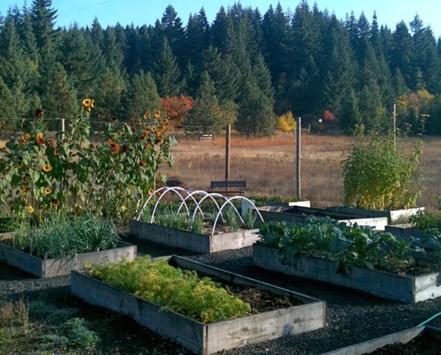 Growing Food and Medicine: The Good, The Bad and The Heartbreak