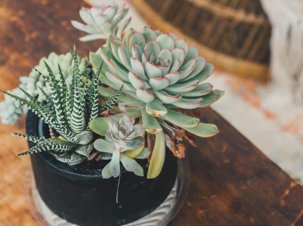 Empathy For a Houseplant