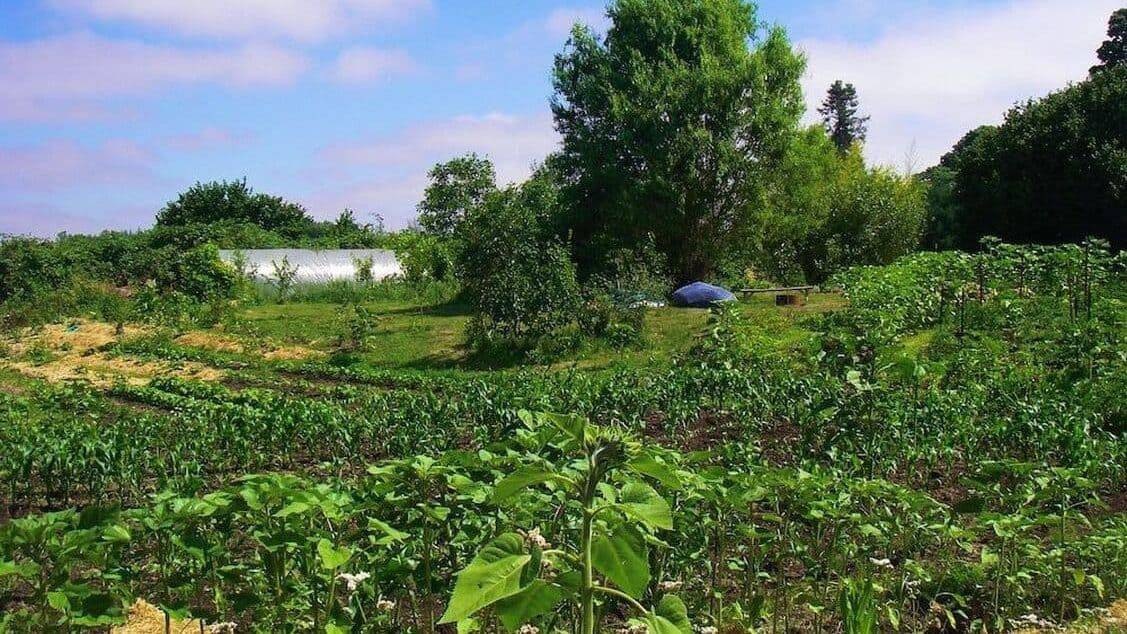 Permaculture farm example on rented land