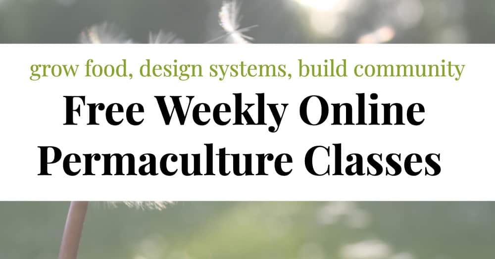 Click here to study Permaculture for Free, Online and in Your Own Home, Garden, and Community!