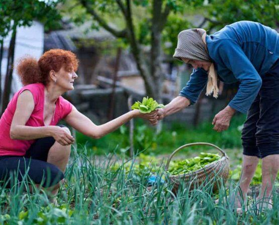 elder sharing garden